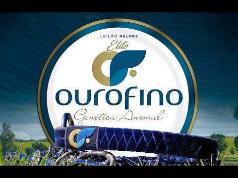 Lote 24   Fontane OuroFino   OURO 2744 Copy