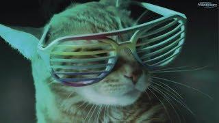 ХИТ! Кошки и коты танцуют на дискотеке. Коты поют. Отжигают, приколы - няшные кошки. Полный отрыв