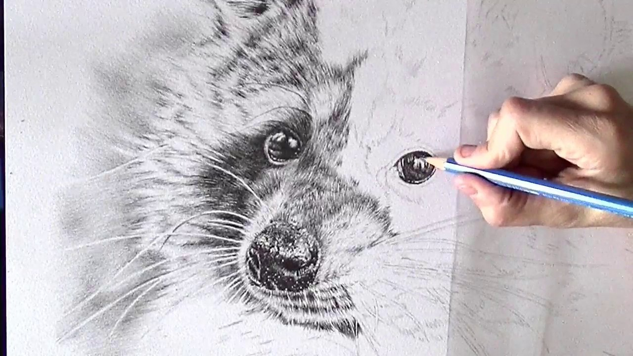 Drawing The Eye Of A Raccoon Realistic Pencil Drawing Youtube