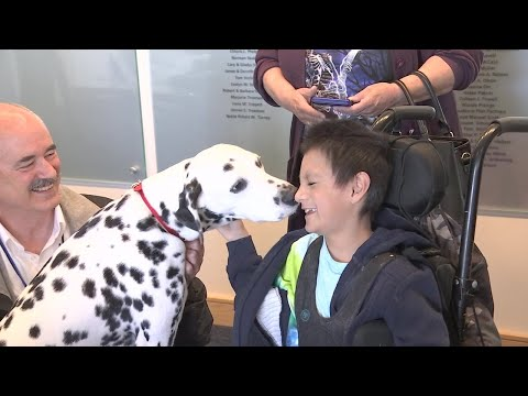 Therapy dogs visit patients at Shriners hospital in celebration of 'National Pet Therapy Day'