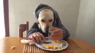 Смешная собака:D