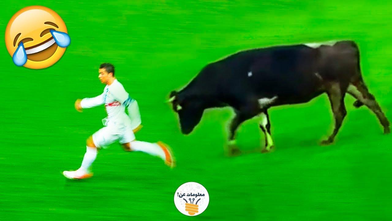 eight مواقف مضحكة لحيوانات دخلت ملاعب كرة القدم