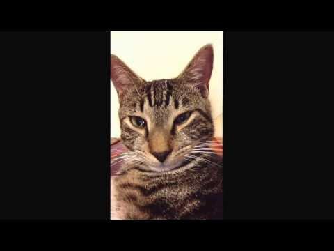 Poker Face Cat