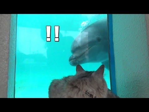 Cat HAL Enjoying Aquarium.  Can he play with dolphin? / 猫、水族館に行く。いるかと遊べるかな?