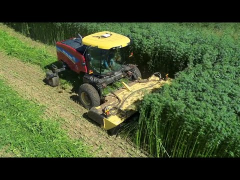 Hemp - The New Agricultural Frontier