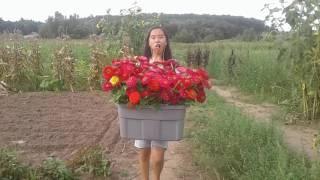 hmong mekas ua teb nyob rau eau claire wi 6