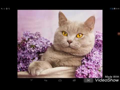 Красивые кошки и котята