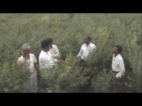 Red gram Crop | Bhaskara Agri Businesses