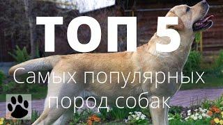 ТОП 5 самых популярных пород собак