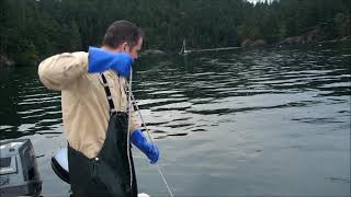 Nesting commercial style dungeness crab pot trap part 2 (in action)