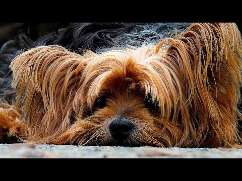 Dog Shedding - Every Dog Owner's Curse - 38 Non Shedding Dog Breeds
