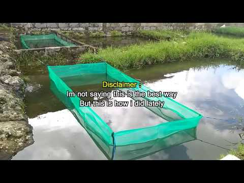 How To Breed Goldfish In Outdoor Pond