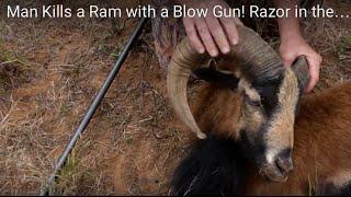 Man Kills a Ram with a Blow Gun! Razor in the Heart!!!