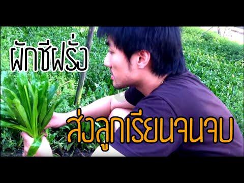 • Glingkak - [ แป้ง ] ผักชีฝรั่ง