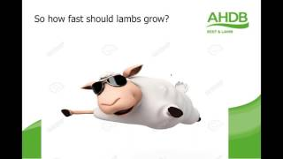 Optimising lamb performance webinar