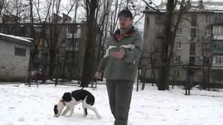 www.komne.com - Как научить собаку командам