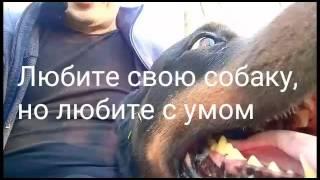 Про любовь к собаке.Советы по дрессировке