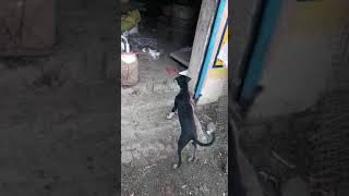 Funny video dog and billi ....@😉😉😉😉😨
