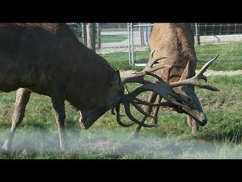 """Des animaux du Loiret ont participé au tournage du film """"L'école buissonnière"""""""