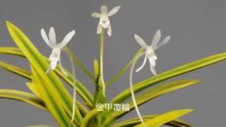 風蘭の花写真集(2016年夏)