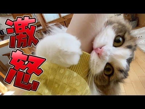 甘えんぼ猫が突然ブチ切れ噛みまくる!激怒の理由は…【激おこ】
