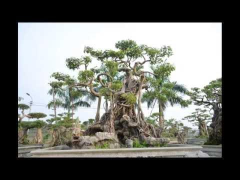 Vườn cây cảnh nghệ thuật nổi bật Vĩnh Phúc - Việt Nam