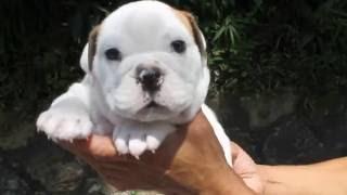 http://passerellewan.jp/puppies/?type=23.