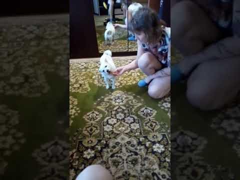 Собаке купили  кость