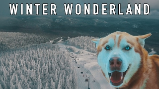 froze to death in canada check this dogs eyes w taylorcutfilms