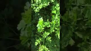 Jak samemu sadzić warzywa i wszystko