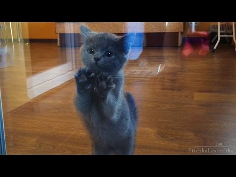 Dancing Kitty | Funny Cat