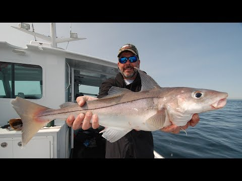New England Fishing // Stellwagen Bank Haddock // Episode 111
