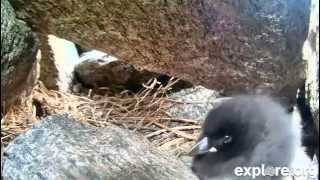 Puffin Lullaby (Hope - 7-17-13)