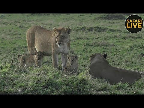 safariLIVE - Sunrise Safari - September 17, 2018