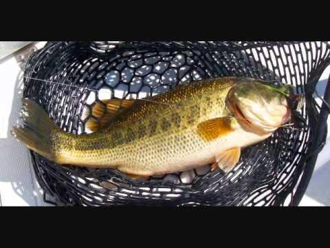Robert Earl Keen  Five Pound Bass