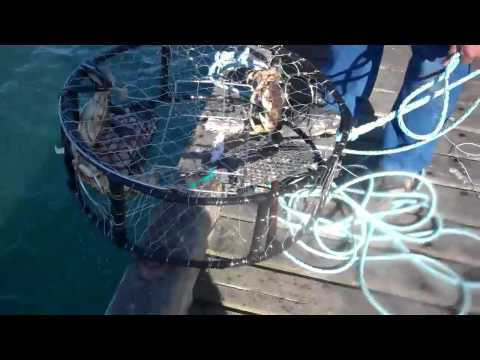 Crabbing In Winchester Bay
