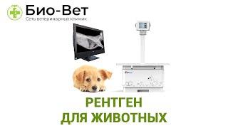 Рентген для животных. Ветеринарная клиника Био-Вет.