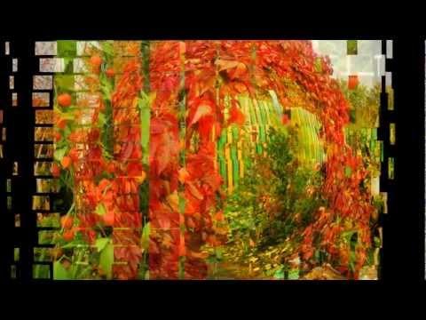 видео: Изюминки нашего сада.