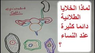 الخلايا الطلائية فى البول - وأسباب وجودها كثيرة عند النساء - Epithelial cells in urine