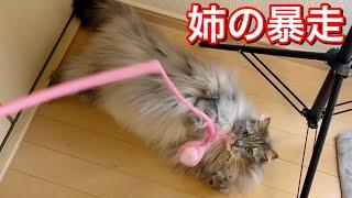 ツンデレ猫がおもちゃ遊びで大暴走しちゃう様子w