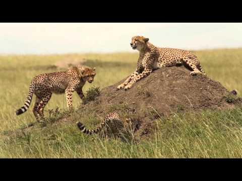 Kenya Wildlife Safari [short film]