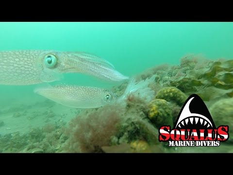 SOUND BEACH LONG ISLAND SCUBA DIVE- SQUALUS MARINE DIVERS