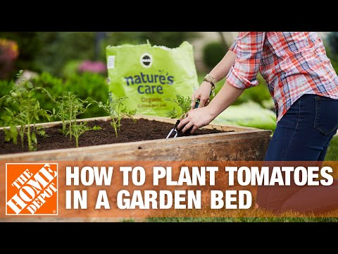 How To Plant Tomatoes in a Garden Bed - The Home Depot