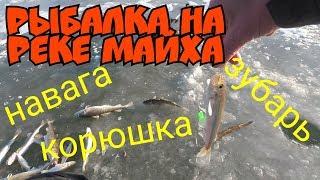Рыбалка на реке МАЙХА навага корюшка зубарь
