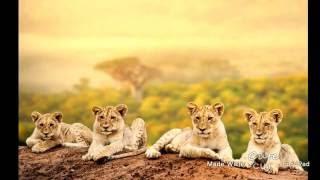 В мире животных и млекопитающих
