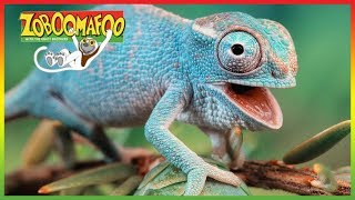 🦎 Zoboomafoo 248 | Buddies | Animal shows for kids | Full Episode | HD 🦎