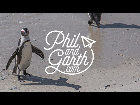 Visit Boulders Beach & Cape Point, South Africa in 60 Seconds