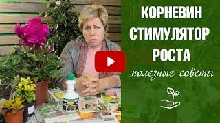 видео Фиалка » Садоводу, дачнику, огороднику.