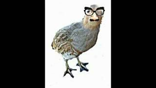 Download Das RAP HUHN --Coversong / Test 1- NEU ! MP3 song and Music Video