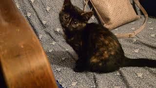 Котенок 2 месяцев в добрые руки.